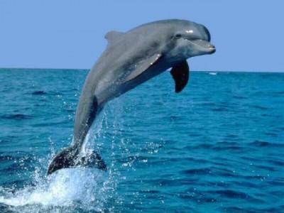 Дельфин по имени Макс